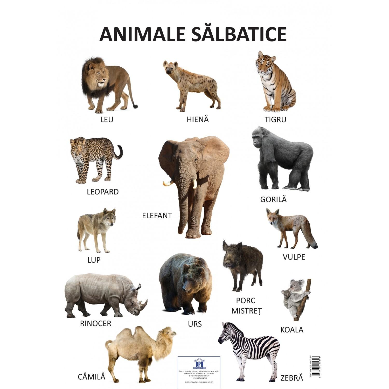 Plansa Animale Salbatice