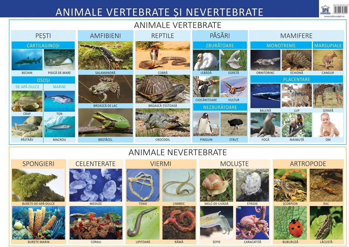 Plansa Animale Vertebrate Si Nevertebrate