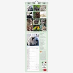 Calendar 2020 - Baby Animals