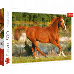 Puzzle 500 de piese - The beauty of gallop
