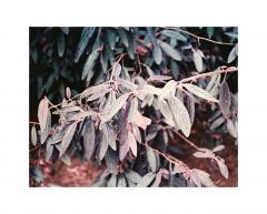 Film color negativ 120 - Lomography Lomochrome Purple XR 100-400